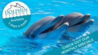 Dolphin-Storage-SALE
